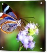 Clear Wings Acrylic Print