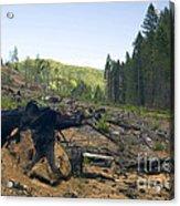 Clearcut Logging Site Acrylic Print