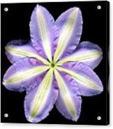 Clematis Backside Acrylic Print