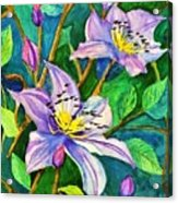 Clematis For Elsie Acrylic Print