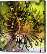 Clematis Magic Acrylic Print