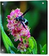Clethra And Wasp Acrylic Print