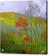 Climb Into Autumn Acrylic Print
