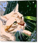 Climbing Cat Acrylic Print