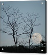 Climbing Moon Acrylic Print