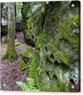 Clinging To The Rock Acrylic Print