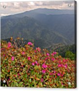 Clingman's Dome From Cliff Top Acrylic Print