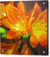 Clivias Acrylic Print