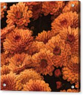 Clockwork Orange Acrylic Print