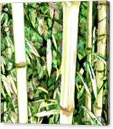 Close Up Big Fresh Bamboo Acrylic Print