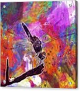Close Up Dragonfly Insect Macro  Acrylic Print
