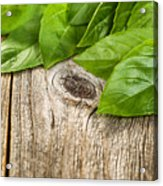 Close Up Fresh Basil Leafs On Rustic Wooden Boards Acrylic Print