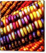 Close Up Indian Corn Acrylic Print