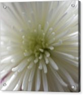 Close-up Of A Flower Acrylic Print