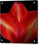 Close-up Of Colorful Amaryllis Flower Petals Acrylic Print