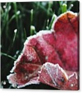 Close Up Of Leaf And Frost Acrylic Print