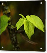 Close Up Of Leaves In Forest Acrylic Print