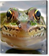 Close-up Of Leopard Frog Acrylic Print