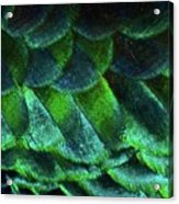 Close Up Of Peacock Feathers Acrylic Print by MadmàT