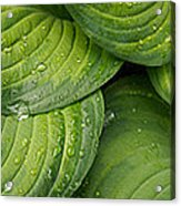 Close-up Of Raindrop On Green Leaves Acrylic Print
