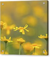 Close Up Of Yellow Flower With Blur Background Acrylic Print