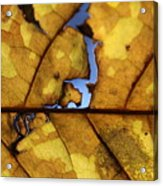 Close Up Of Yellow Leaf Acrylic Print
