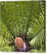 Close-up Palm Leaves Acrylic Print