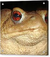 Close Up Portrait Of A Common Toad Acrylic Print