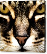 Close Up Shot Of A Cat Acrylic Print