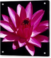 Close Up View Of A Red Water Lily Acrylic Print