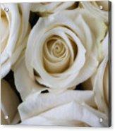 Close Up White Roses Acrylic Print