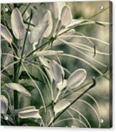 Close Up Wild Flower Acrylic Print