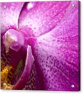 Close View Of A Pink Orchid Blossom Acrylic Print