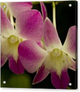 Close View Of A Pink Orchid Flowers Acrylic Print