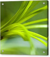 Close View Of Green Flower Acrylic Print