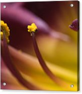 Close View Of Stamen Of A Flower Acrylic Print