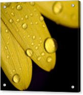 Close View Of Water Drops On The Petals Acrylic Print