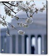 Closeup Of Cherry Blossoms Acrylic Print