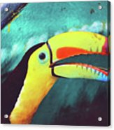 Closeup Portrait Of A Colorful And Exotic Toucan Bird Against Blue Background Nicaragua Acrylic Print