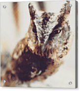 Closeup Portrait Of A Young Owl Looking At The Camera Acrylic Print
