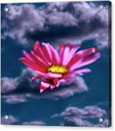 Cloud Flower.  Acrylic Print