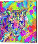 Clouded Leopard  Acrylic Print