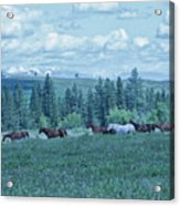 Clouds And Horses Acrylic Print