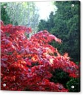 Clouds Of Leaves Acrylic Print