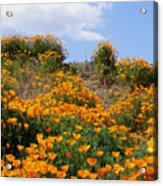 Clouds Over Poppies Acrylic Print