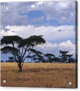 Clouds Over The Masai Mara Acrylic Print