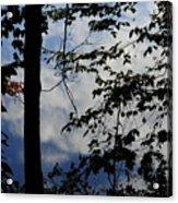 Clouds Tree Water Acrylic Print