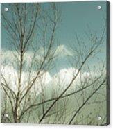 Cloudy Blue Sky Through Tree Top No 1 Acrylic Print