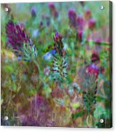 Clover Field Impressions Acrylic Print