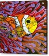 Clownfish I  Acrylic Print